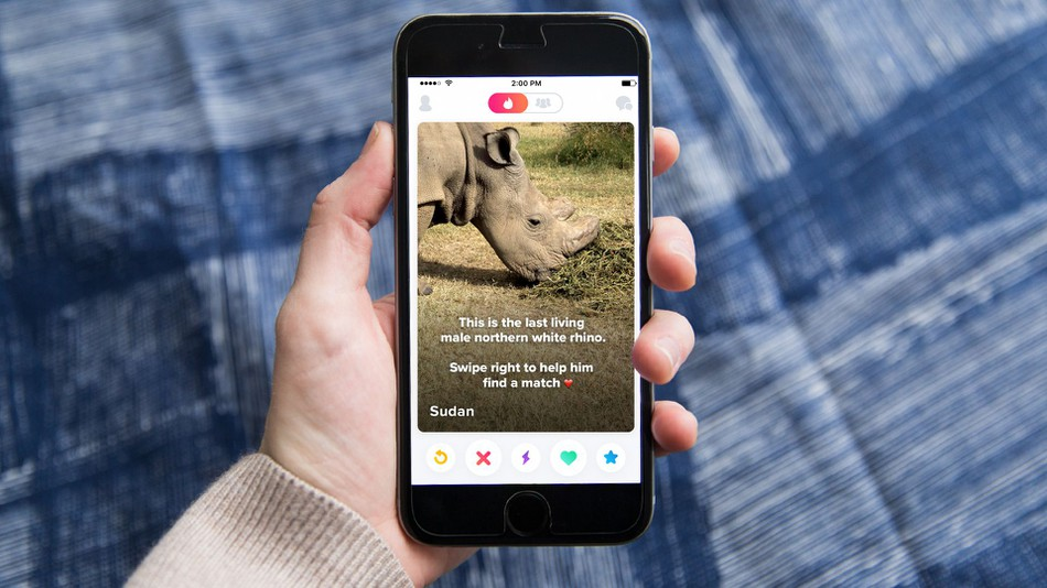 The Last Remaining Male White Rhino In The World Is On Tinder