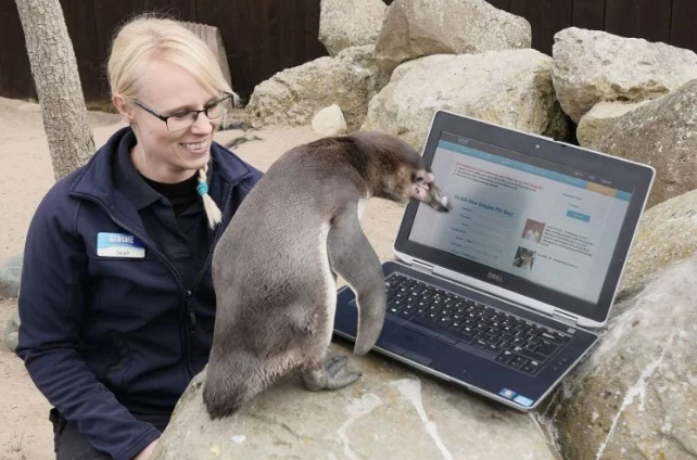 Keepers Turn To PlentyOfFish To Help Find Spruce The Penguin A Mate