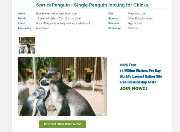 Penguin dating website
