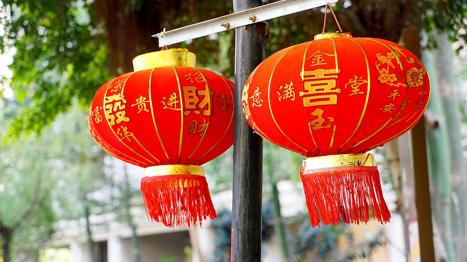 Zhenai Activity Spikes During Chinese New Year