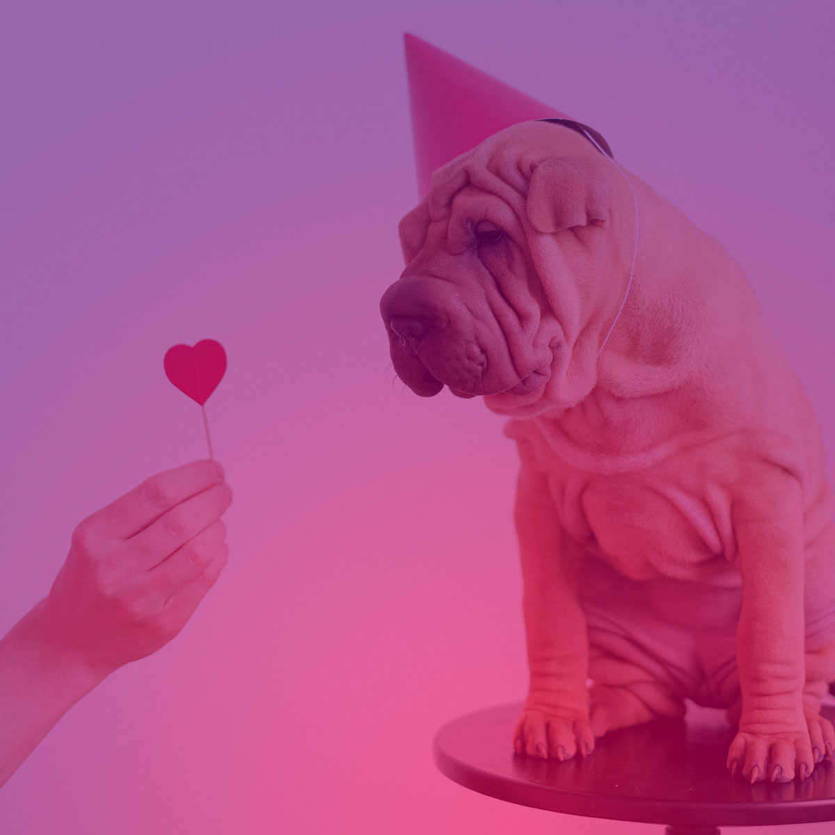 Valentine's Day Scams: 2021 In Numbers