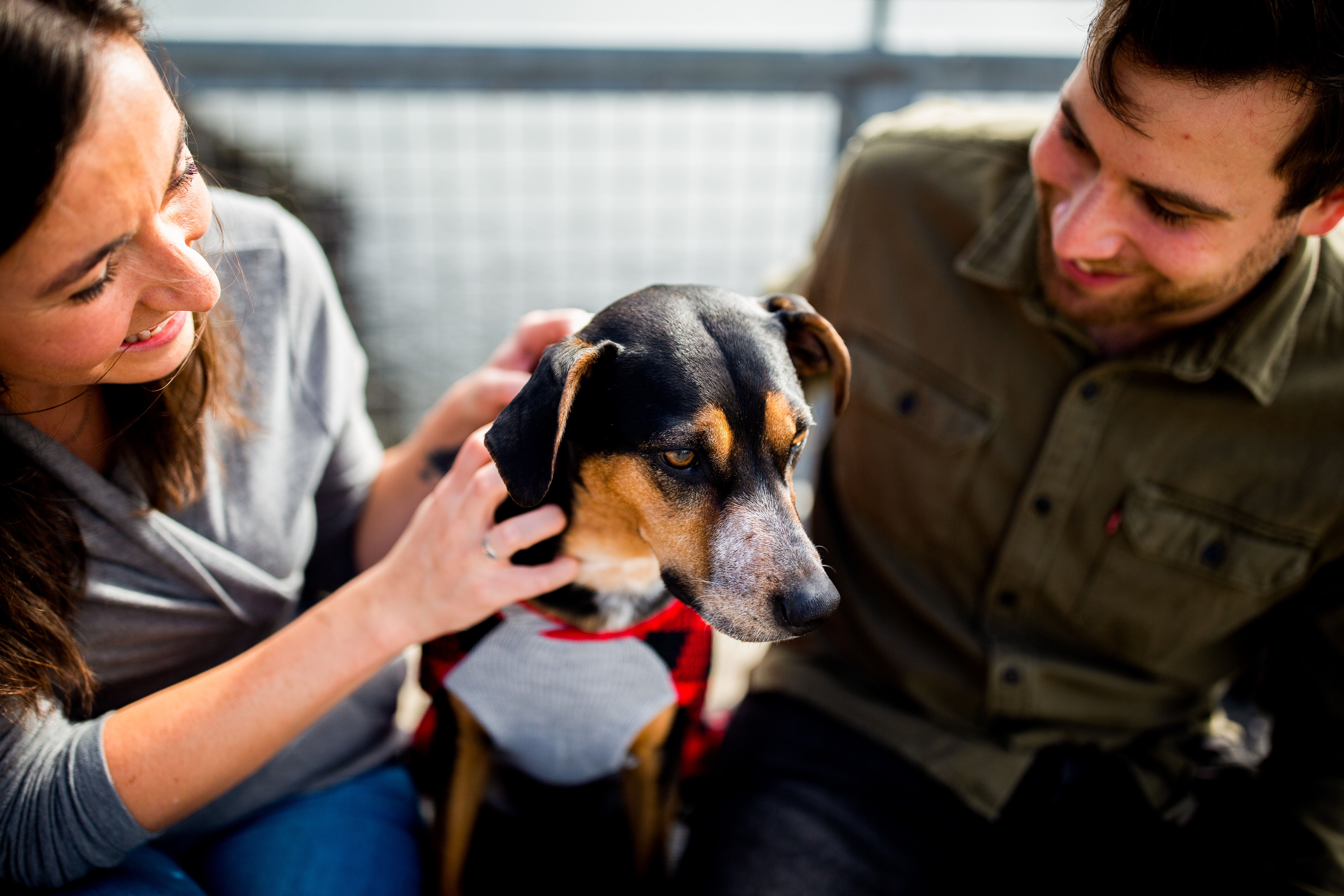 Adopting Dogs Increases Popularity, Says OkCupid Study